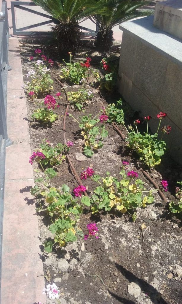 Las flores de Jorge Juan embellecen las calles y plazas de Novelda
